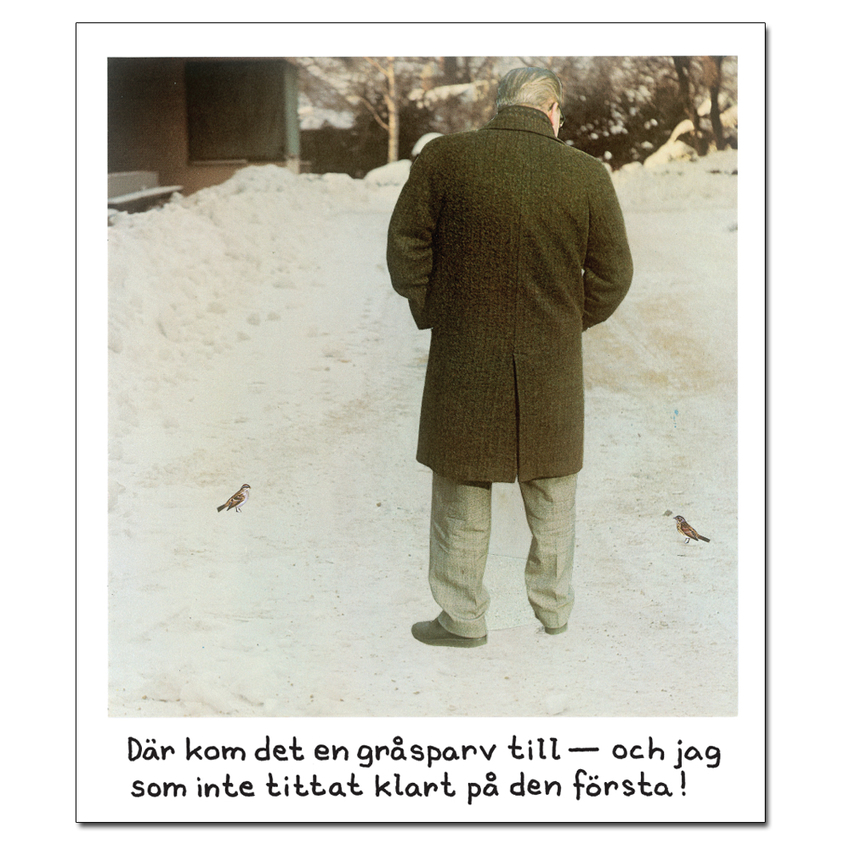 Magnet Jan Stenmark 'Gråsparv'